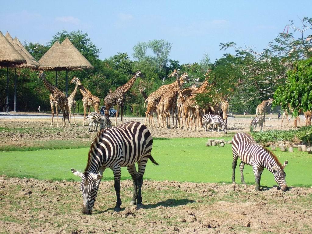 Vườn thú Phú Quốc sở hữu bộ sưu tập động vật hoang dã lớn bậc nhất thế giới